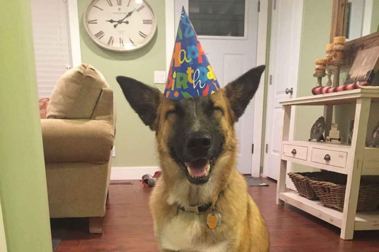 Animals Are Having A Birthday Party