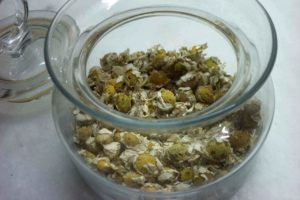 Chamomile Cure For Sinus Infection