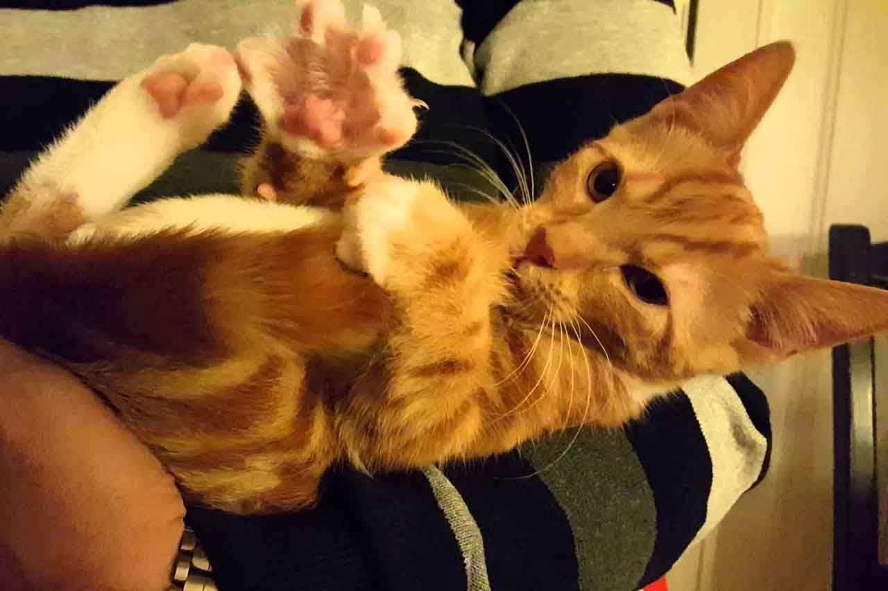 You are currently viewing Watch This Adorable Kitten Sucking His Own Tail