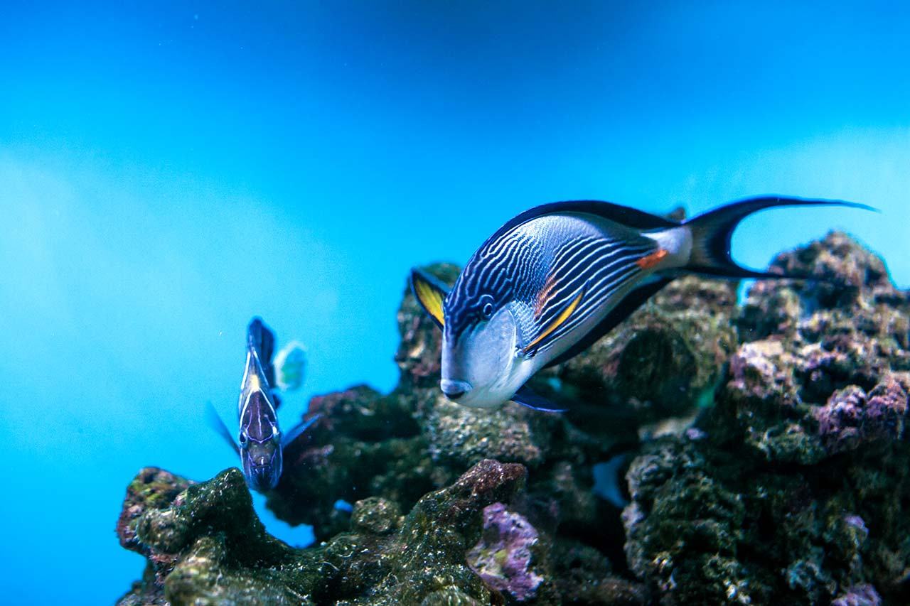 The 25 Most Impressive Underwater Photos Of 2020