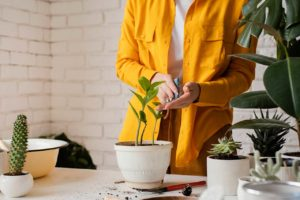 Urban Jungle For Beginners: Easy To Care Houseplants